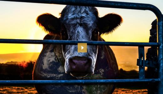 地球の環境を守るには肉を食べることをやめなければいけない!環境問題のタブーに切り込む映画『COWSPIRACY』に考えさせられる