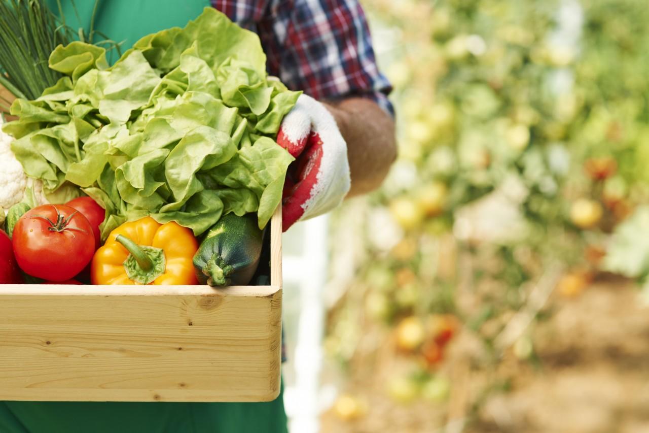 新鮮な旬の野菜を直送してくれる日本各地の農家農園まとめ71選(随時更新)